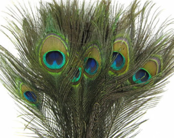 PEACOCK FEATHERS AND TRIM