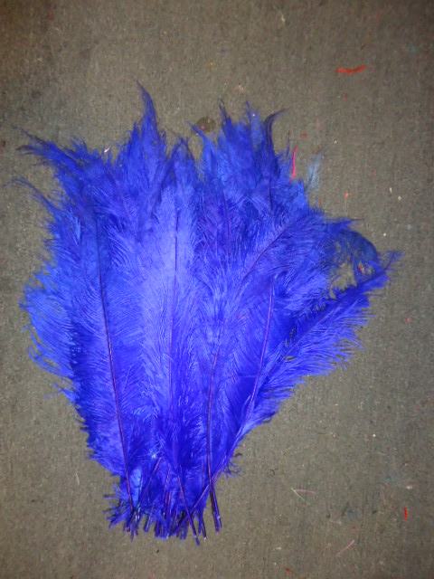 Ostrich Feather Plume 18-24 INCH ROYAL BLUE
