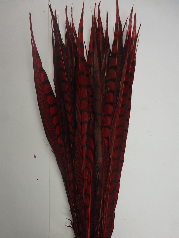 Lady Amherst Pheasant Tail Feather