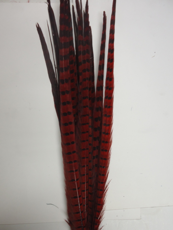 Pheasant Tail Feather- Ringneck
