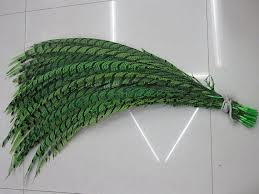 PHEASANT TAIL FEATHER GREEN