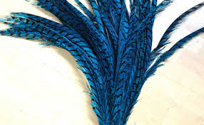PHEASANT TAIL FEATHER ROYAL BLUE