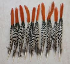 PHEASANT TAIL FEATHER NATURAL COLOR WITH TIP